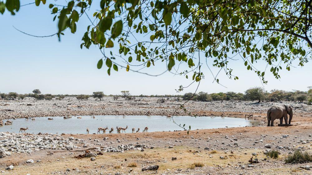 Photo in Landscape #africa #namibia #etosha national park