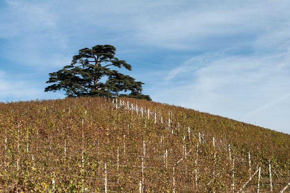 Photo in Nature #italy #piemonte #tree #autumn