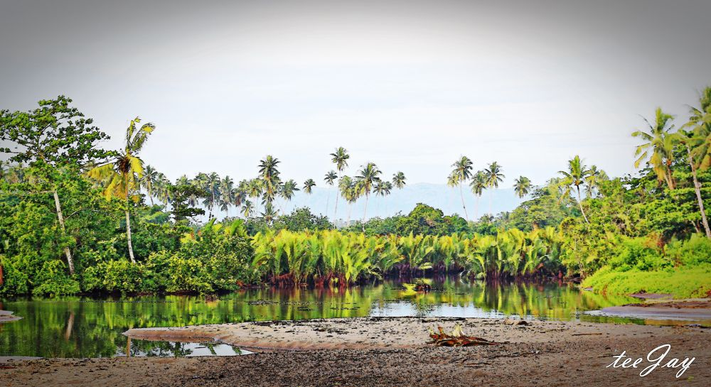 Photo in Nature #swamp #lake #beach #sand #morning