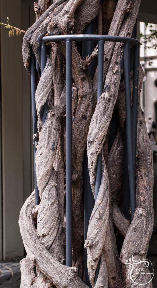 Photo in Cityscape #metal #tree #plant #roots #force #power #nature