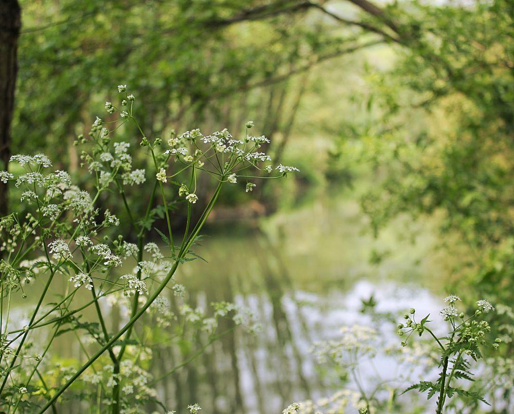 Photo in Nature #river #flower #nature #spring #walk #blueanna