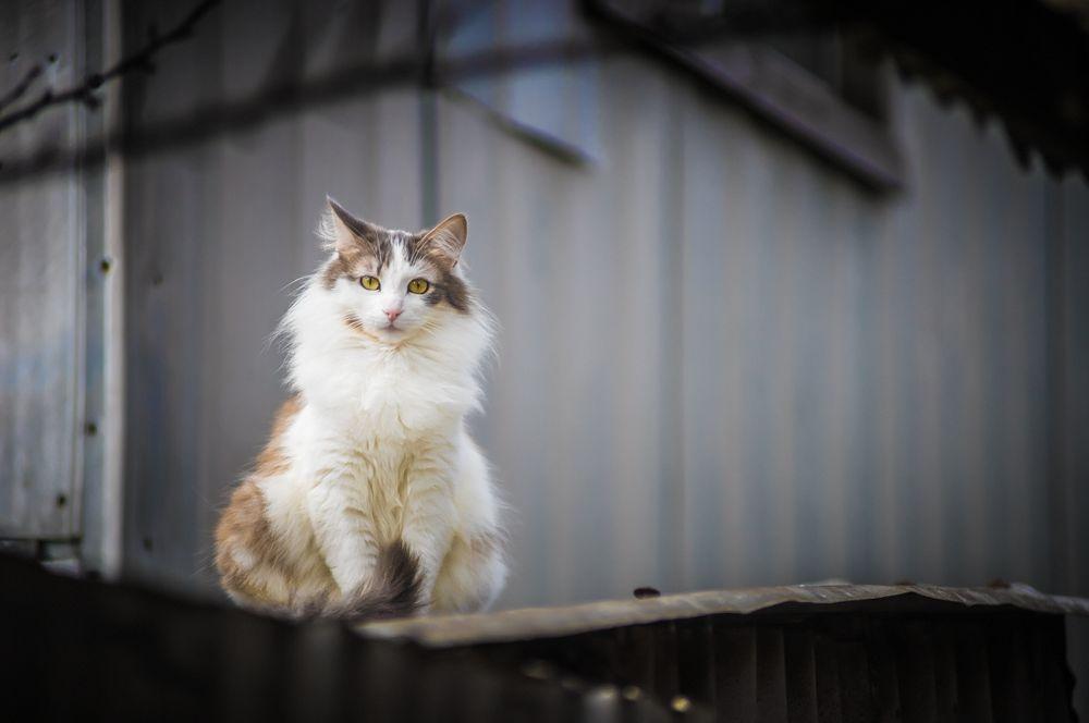 Photo in Still Life #cat #pet #winter