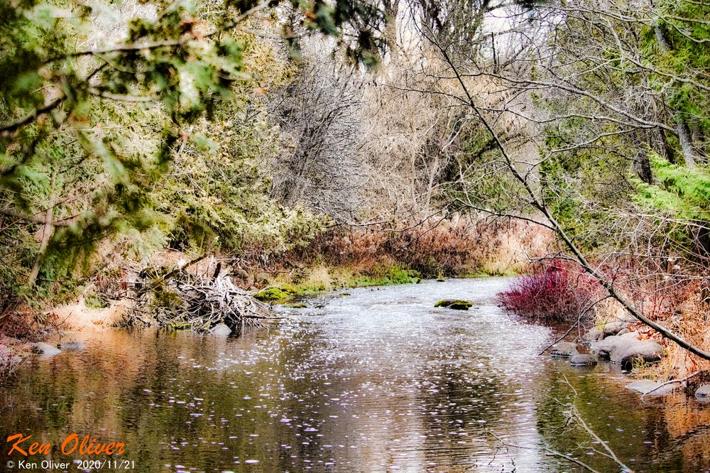 Photo in Nature #nature #creek #water #trees