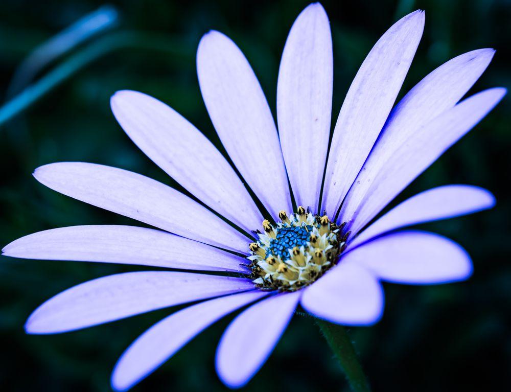 Photo in Nature #flower #flowers #summer #nature #macro #up close #pastel #leaf #petal #petals #purple #pink