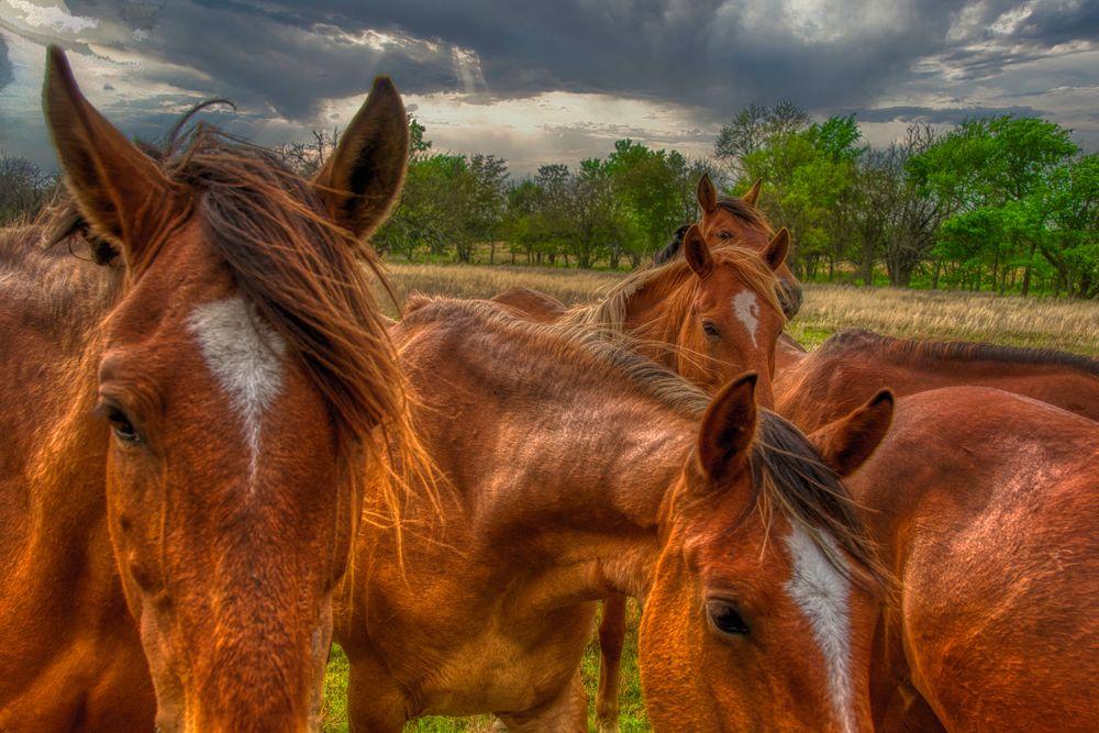 Photo in Random #horses #wild mustangs #ranch #oklahoma