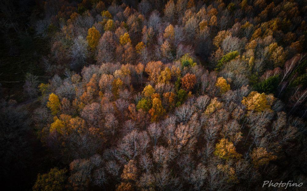 Photo in Aerial #aerial #aerial view #drone #autumn #danish #denmark #gribskov