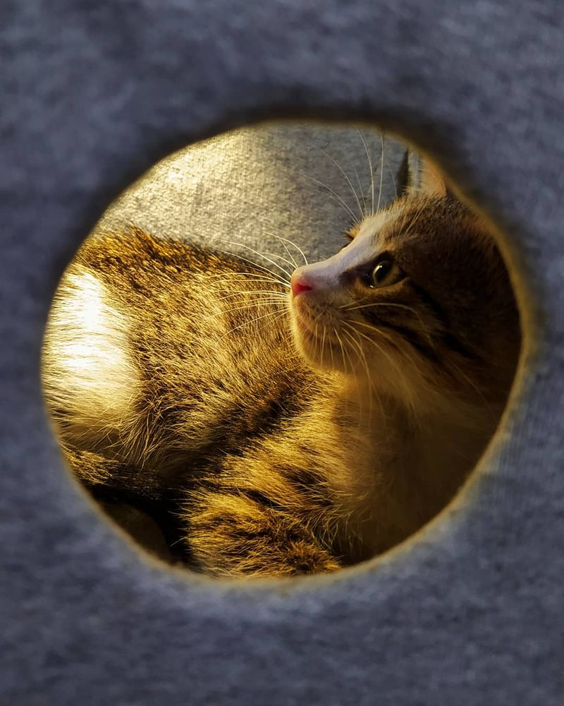 Photo in Animal #cat #light #yellow #nature #animal #pets