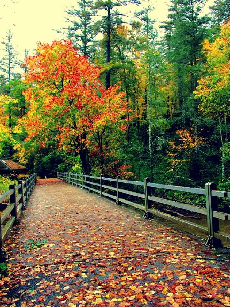Photo in Landscape #nc #fallbeauty #amazing
