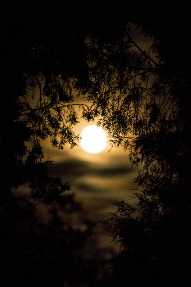 Photo in Landscape #moon nighttime photos