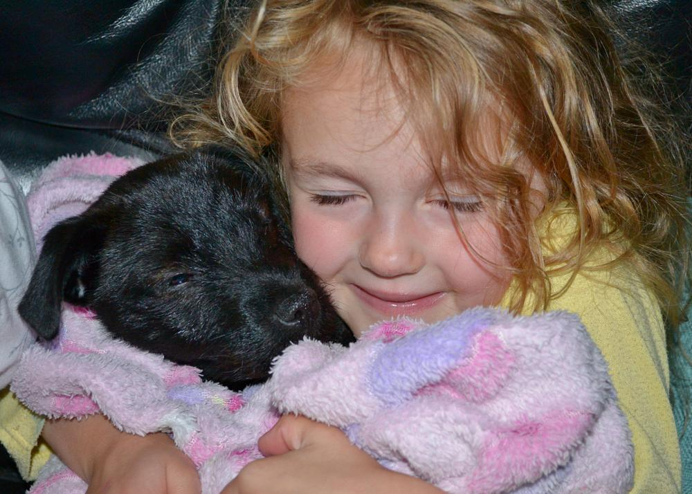 Photo in Family #puppy #cuddles #awwh #cute