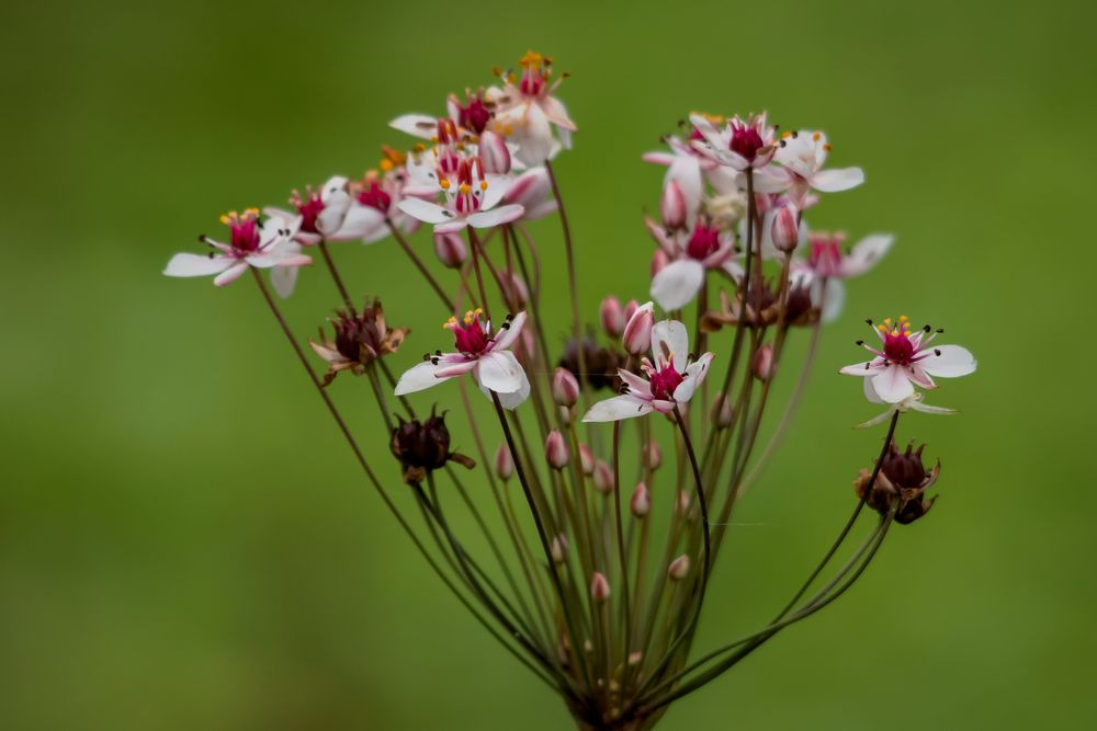 Photo in Nature #virág