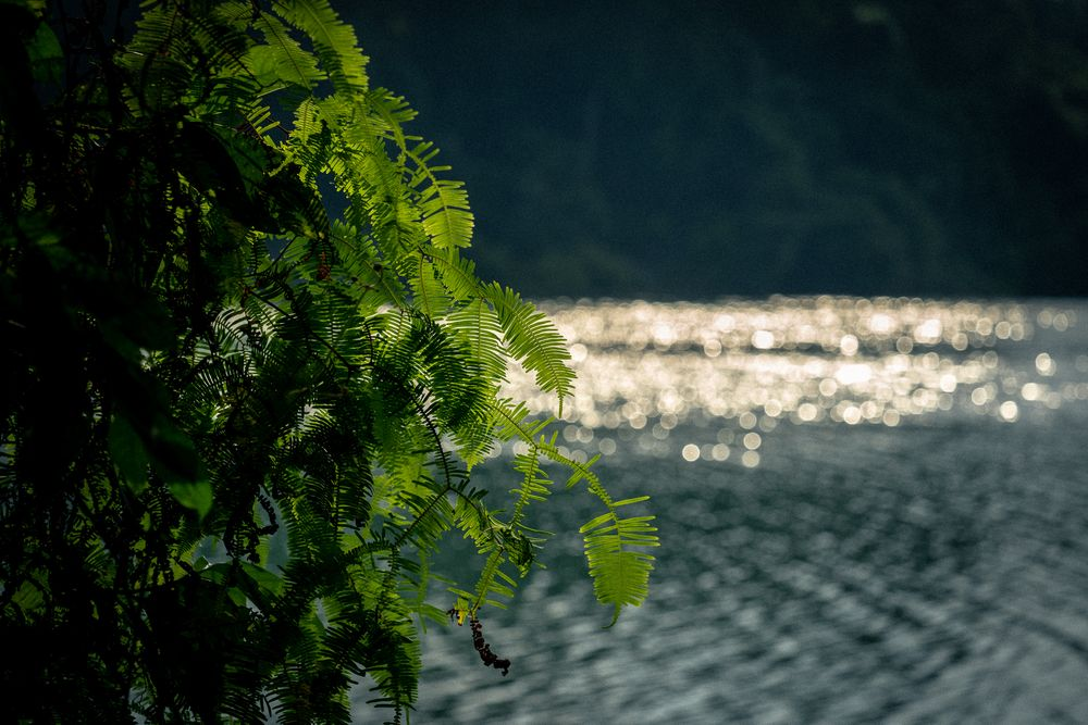 Photo in Landscape #water #macro #landscape