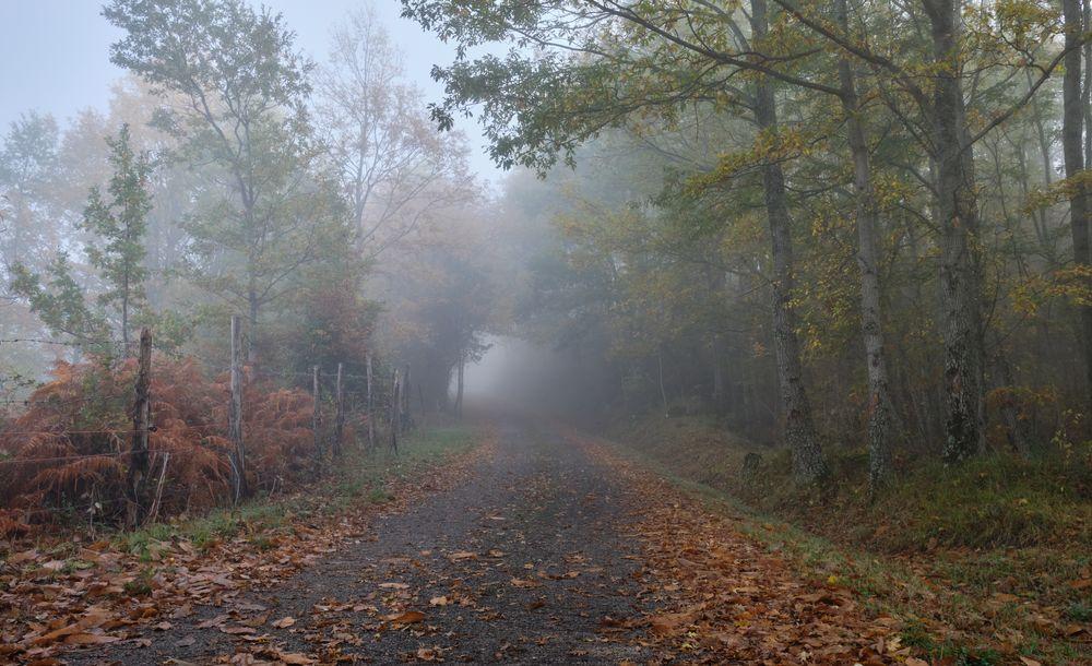 Photo in Nature #colori #autunno #nebbia #alberi