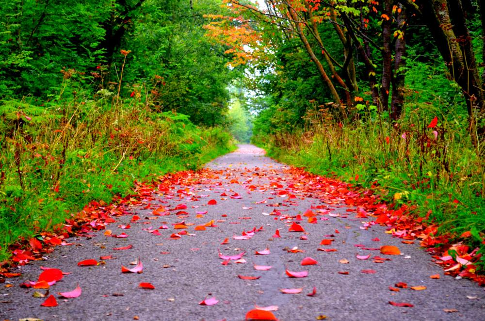 Photo in Nature #nature #red carpet #red #autumn #alone #natural