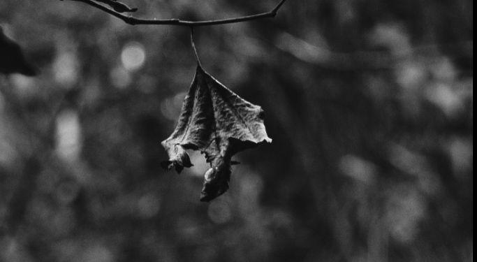 Photo in Black and White #blackandwhite #folha #folhas #autumn #winter #cold #florest #preto e branco #leaf #minimalism