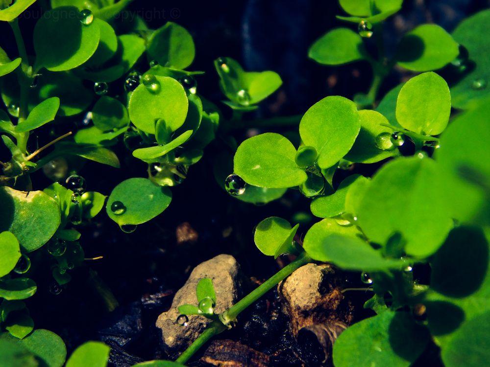Photo in Nature #el salvador #nature #plants #flowers