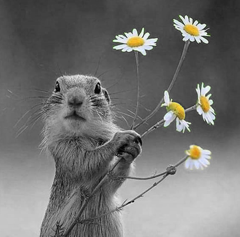 Photo in Animal #nature #animal #gopher #flower #outdoors #yellow