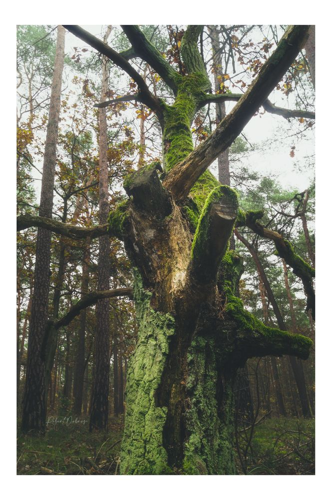 Photo in Landscape #forest #tree #oak #landscape #nature #autumn