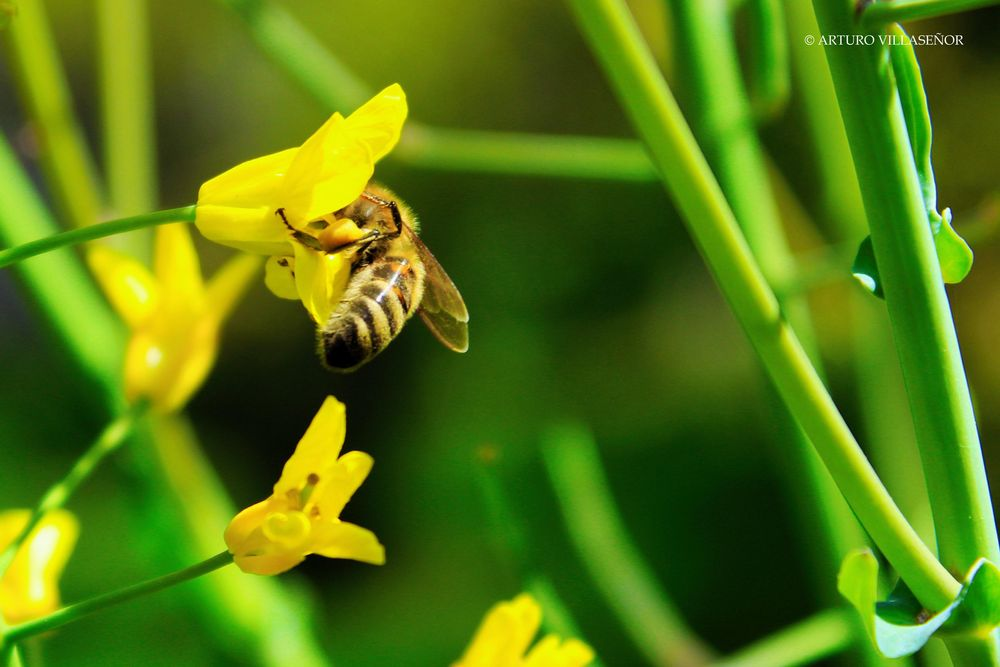 Photo in Nature #flower #garden #bee #color #plants #yellow #nature #life