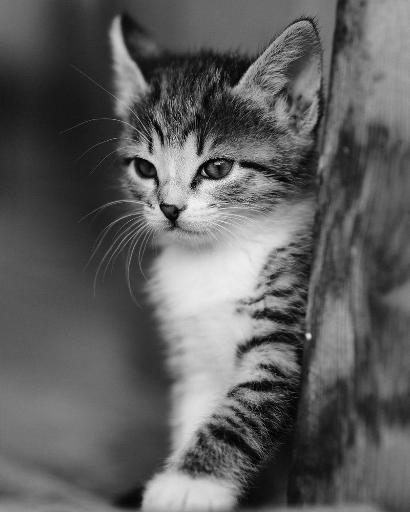 Photo in Animal #cat #animal #instagram #nikon