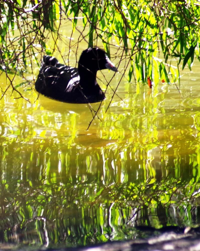 Photo in Animal #nature #random #animal