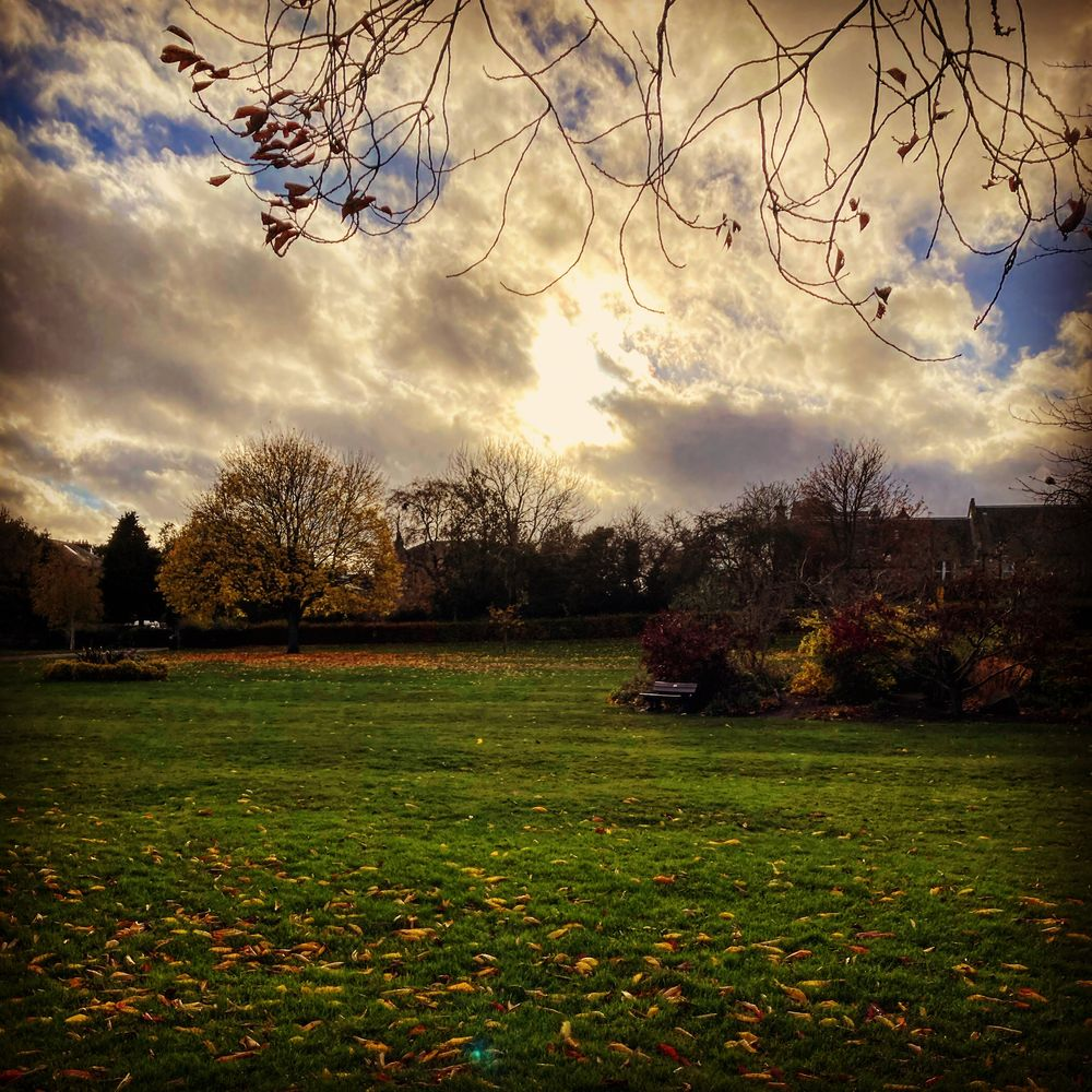 Photo in Nature #tree #park #green #autumn #fall #sky #clouds #light