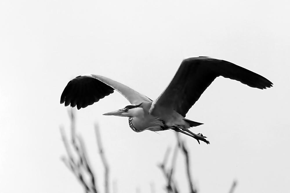 Photo in Animal #isle #nature #birds