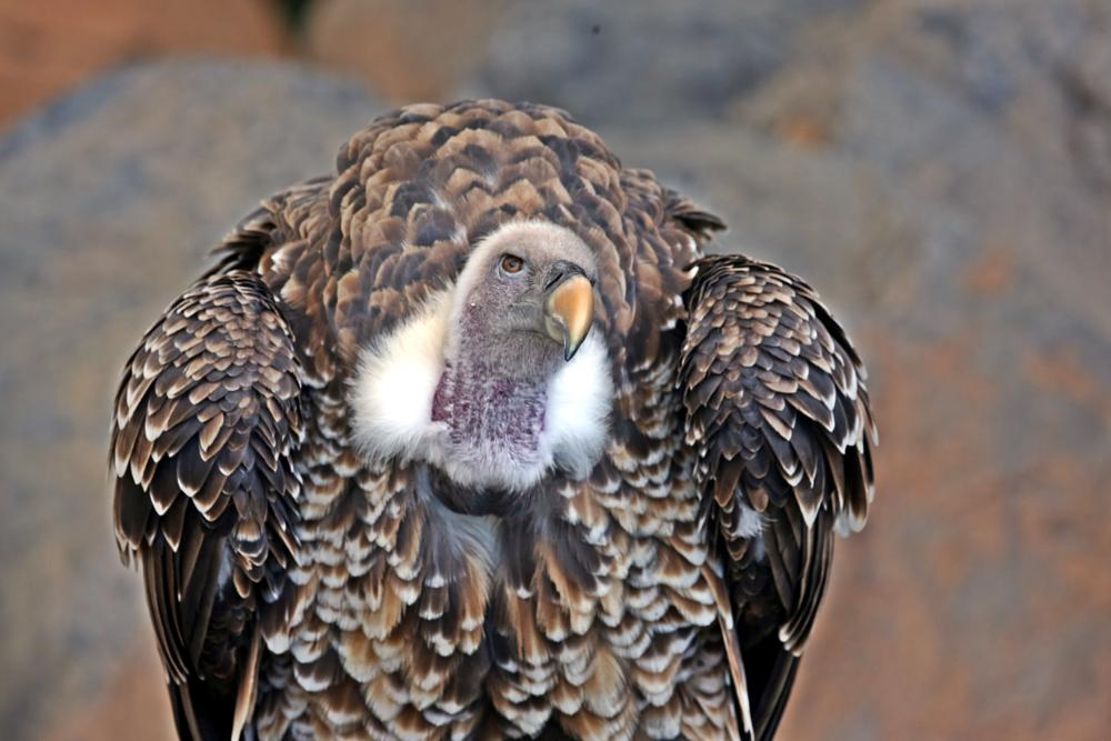 Photo in Animal #andes condor #zoo #animal #bird