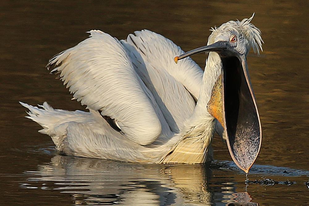 Photo in Animal #bird #water #zoo