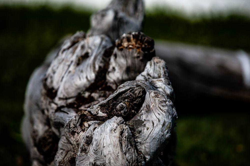 Photo in Random #wood #branch #old wood #black and white