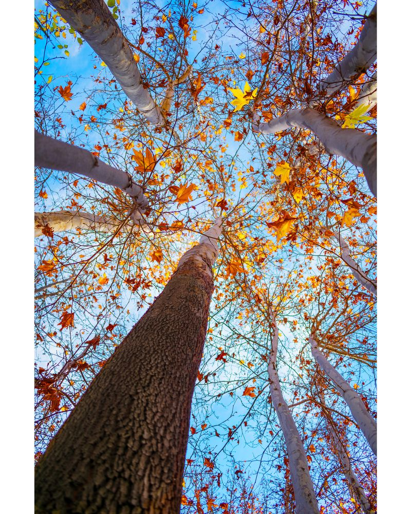 Photo in Nature #autumn #fall #nature
