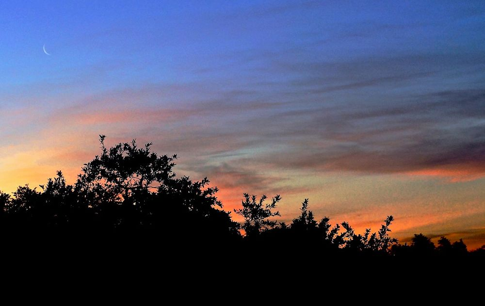Photo in Nature #moon #sky #trees #nature #sunset