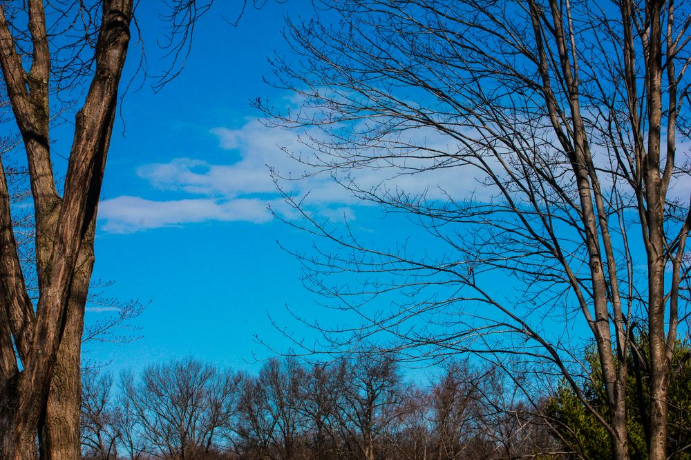 Photo in Portrait #morning skies #natures landscapes #blue skies
