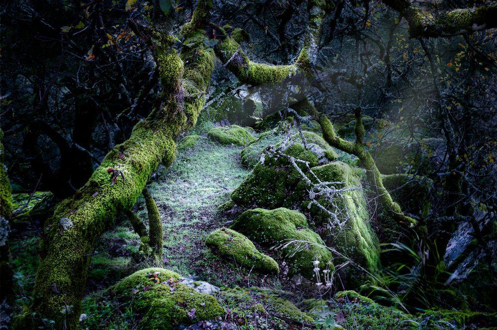 Photo in Nature #arboles #paisaje #forest #night #dark moon