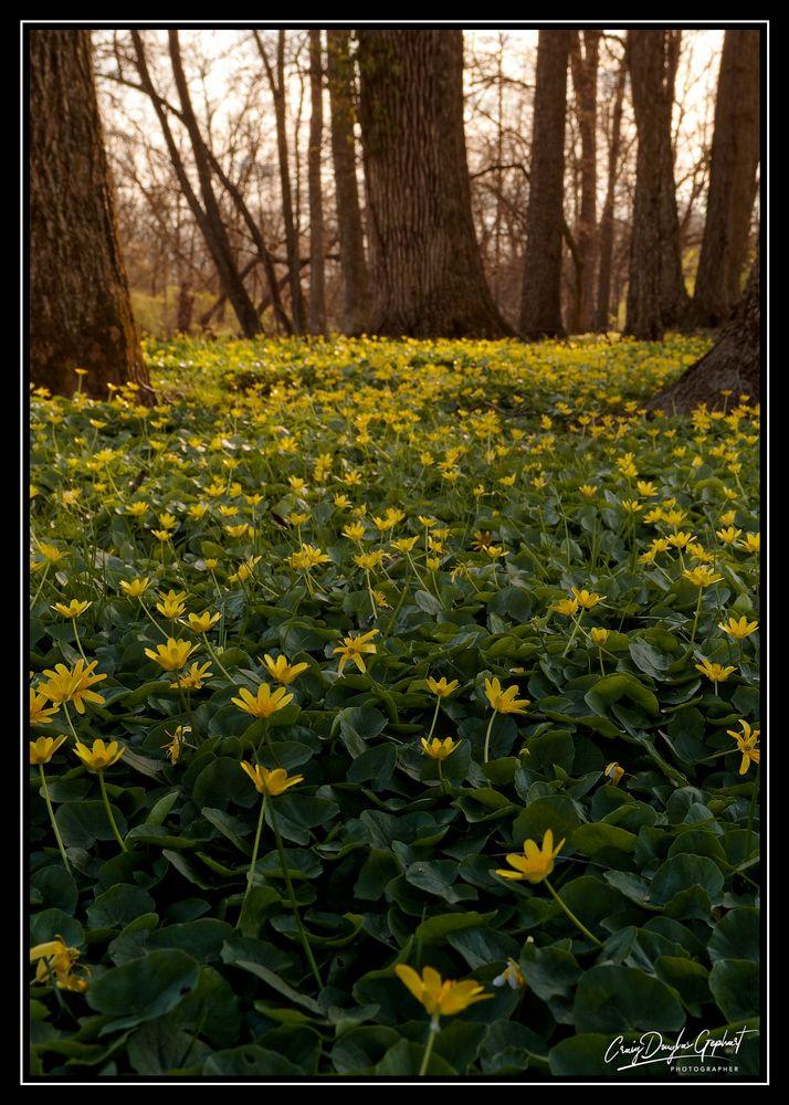 Photo in Landscape #flowers #yellow #landscape #evening