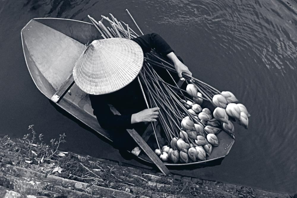 Photo in Black and White #vietnamese #lotus #black_and_white