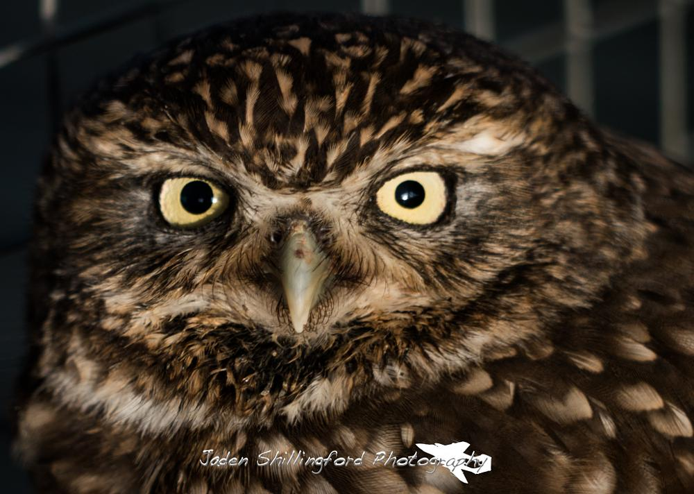 Photo in Animal #owl #staring #little