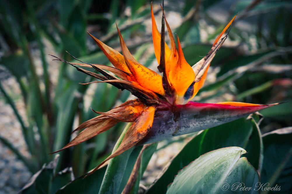 Photo in Random #garden #flame #plant #nature