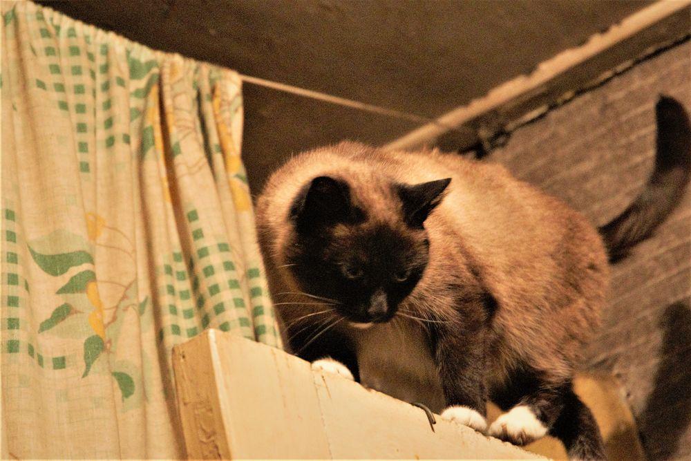 Photo in Random #cats