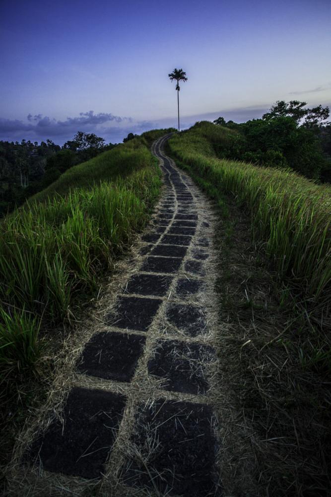 Photo in Travel #ubud #rural #hiking #track #walk #footpath #travel #indonesia #tropic