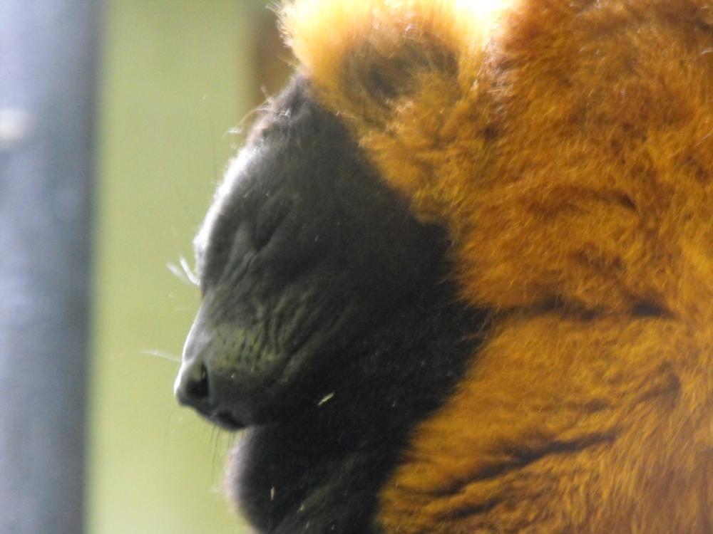 Photo in Animal #animal #leama #marwell #zoo