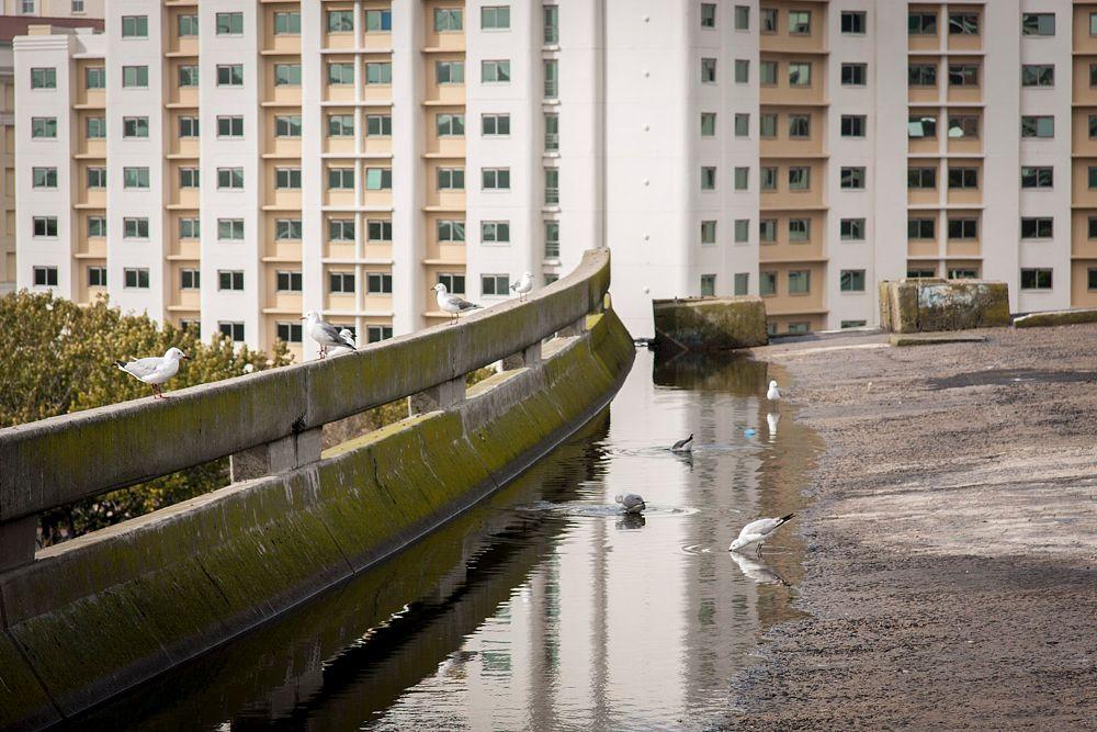 Photo in Random #bridge #fly-over #rain #water #reflect #hotel #birds