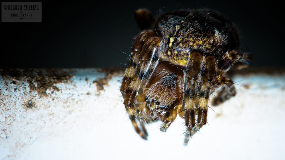 Photo in Macro #spider #creepy #macro #white #black #rust #metal #legs #hairy