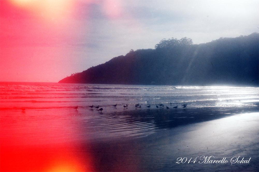 Photo in Film #film #filme #analog #analogico #nature #natureza #beach #praia #marcello #sokal