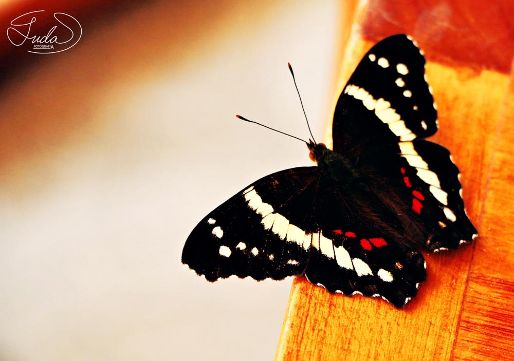 Photo in Nature #butterfly #nature