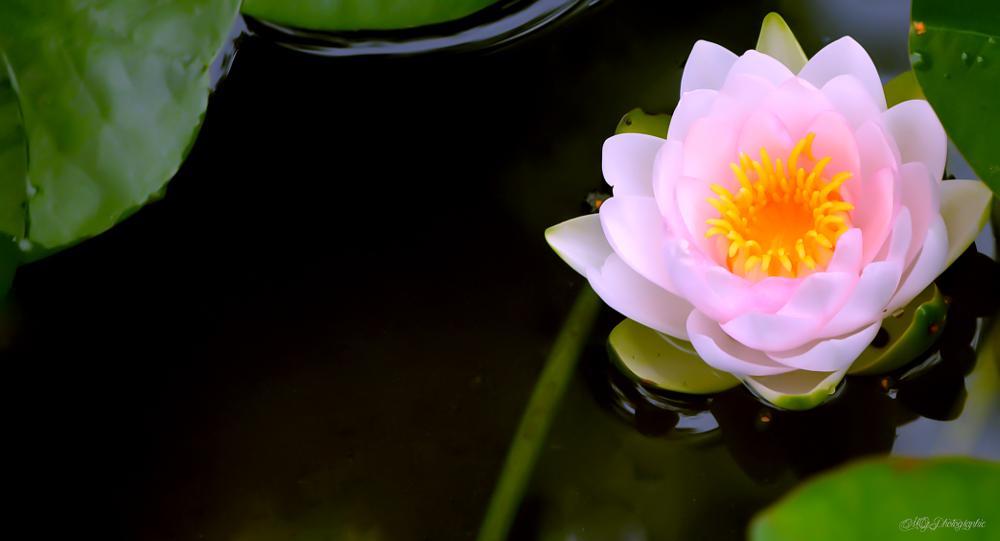 Photo in Nature #fleure #citation #nature