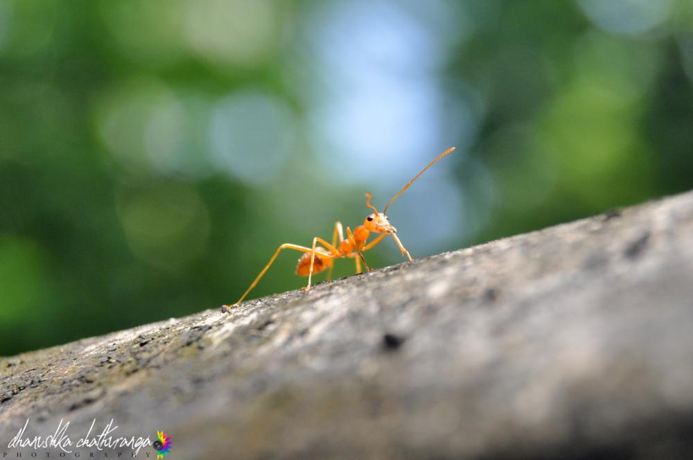Photo in Macro #ant #insect