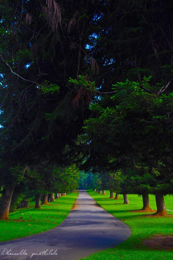 Photo in Travel #peradeniya botanical garden #botanical garden #peradeniya garden #green #sri lanka #kandy #park