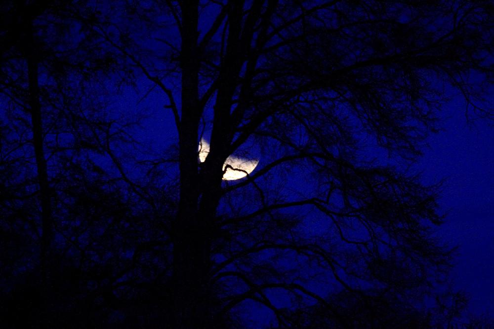 Photo in Nature #moon #chile
