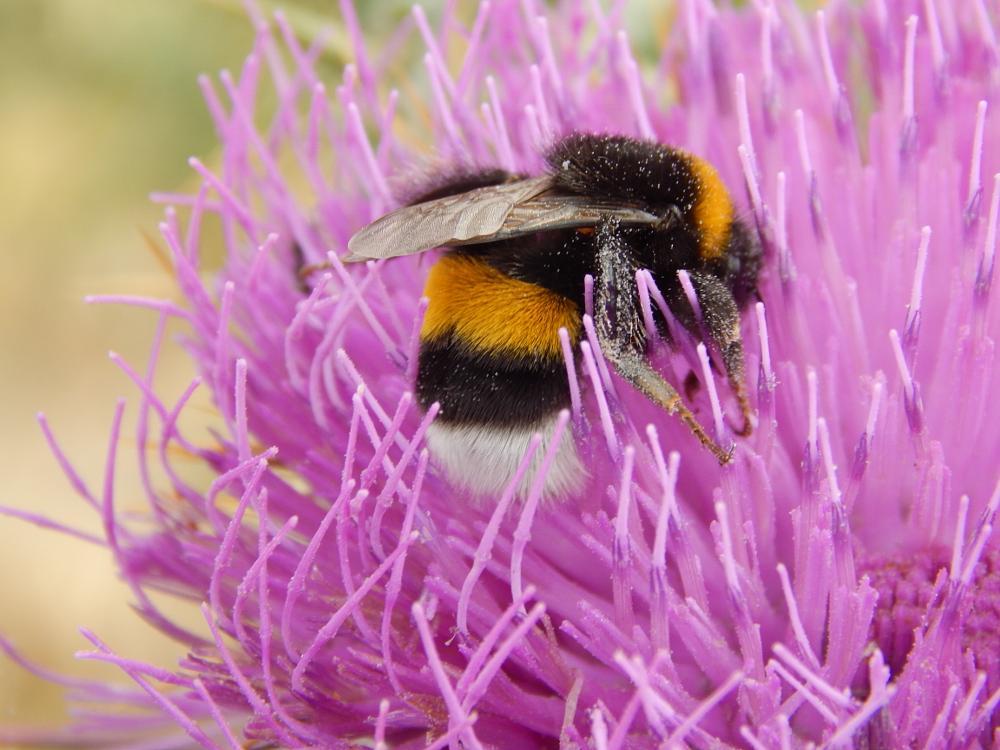 Photo in Macro #bee #polination #greece